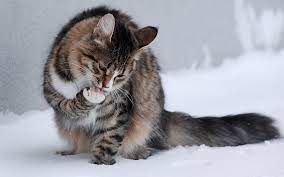 Winter Kitten Desktop Wallpaper (Page 5 ...