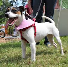 a dog wearing a red back clip collar
