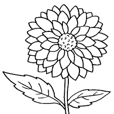 Big Flower Drawing At Getdrawingscom Free For Personal Use Big