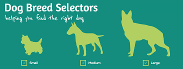 dog breed selector tools find your perfect dog