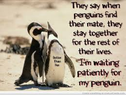 Penguin Love Quotes Adorable Penguin Love Quotes Download Free Best Quotes Everydays
