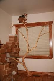 cat tree  clinton l wood  remodel timberwork carpentry  diy