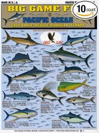 Tuna Fish Size Chart Tightlines Chart 2 Big Game Fish Id Chart Pacific Ocean
