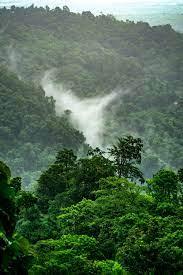 900+ Jungle Background Images: Download ...