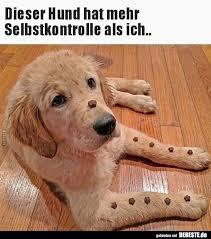Dieser Hund Hat Mehr Selbstkontrolle Als Ich Lustige Bilder