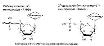 Реферат ЯМР спектроскопия нуклеиновых кислот полисахаридов и  ЯМР спектроскопия нуклеиновых кислот полисахаридов и липидов