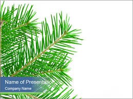 Branch Template Green Spruce Branch Powerpoint Template Infographics Slides
