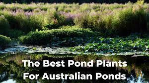 best pond plants for australian ponds