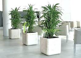 interior landscaping office.  Landscaping Fake Plant Decor Office Plants Interior Landscaping Tropical Live Silk Trop Intended Interior Landscaping Office