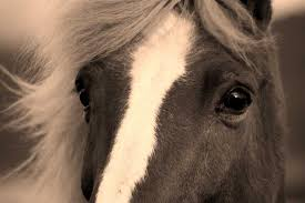 professional horse face photography. On Professional Horse Face Photography