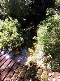 Laguna Creek