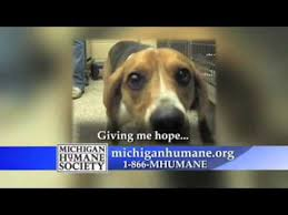 humane society ads. Exellent Ads Michigan Humane Society Commercial And Ads I