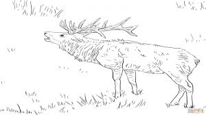 Small Picture Elk Coloring Page Elioleracom