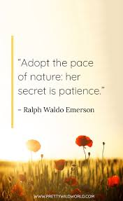 Best Nature Quotes Top 35 Quotes About Nature And Life
