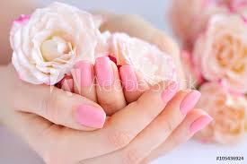 Fotografie Obraz Ruce ženy S Růžovým Manikúra Na Nehty A Růže
