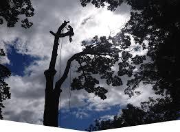 professional tree service in kingston ontario