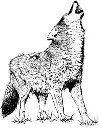 Realistic Wolf Howling Coloring Pages Free Coloring For Kids 2019