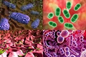 Гнилостные бактерии в природе и организме человека в желудке  Гнилостные бактерии в природе и организме человека в желудке кишечнике а также в воде молоке их тип питания лечение