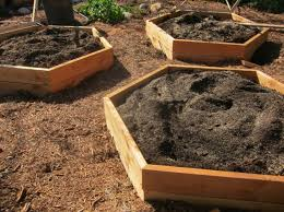 the new hexagonal raised beds more on the design in another post