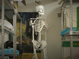 clroom skeleton whose bones are these