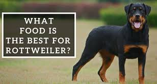 Rottweiler Puppy Diet Chart What Food Is The Best For Rottweiler Pets World