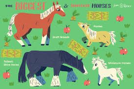 The Largest And Smallest Breeds Horses In The World