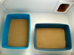 these boxes contain worlds best cat litter multiple cat clumping formula lavender scented cat litter box