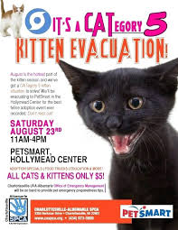 Lost Pet Flyer Maker Classy Great Kitten Adoption Poster Lost Cat Flyer Template Word Definition
