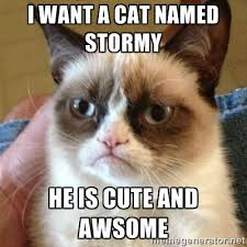 I want a cat named Stormy He is cute and awsome - Grumpy Cat ... via Relatably.com