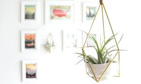 hanging air plant holder wall plants display ideas
