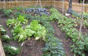 Small Picture Home Vegetable Garden Gardening Ideas