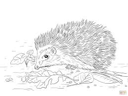 Small Picture Hedgehog Coloring Pages 21 Sonic The Hedgehog Coloring Pages Free