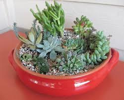 Small Picture dish garden ideas succulent dish garden brocade designsbrocade