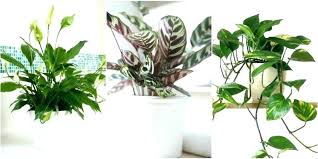 indoor plants names and pictures house plants names indoor plants that like shade low light houseplants indoor plants names