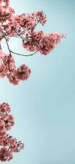 Iphone 11 Pro Wallpaper Flower