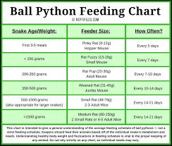Ball Python Feeding Schedule Ball Python Pet Snake Python