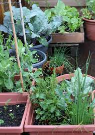 container gardening easy vegetables to