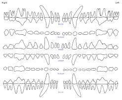 Triadan Dental Chart Dog