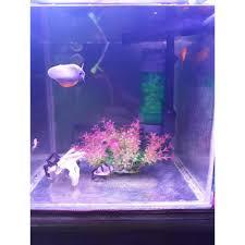 Đèn led bật tắt 3 chế độ màu cho bể cá bể thủy sinh loại 6 hàng bóng - Đèn  thay đổi màu sắc giá rẻ nhất tại Hải Dương