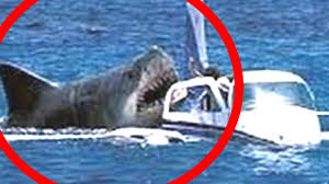 megalodon shark sightings 2015. Unique Megalodon REAL MEGALODON Caught On Camera 2015  Megalodon Real Shark Meg  With Shark Sightings E