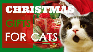 197 Best Christmas Kitties Images On Pinterest  Christmas Animals Christmas Gifts Cats