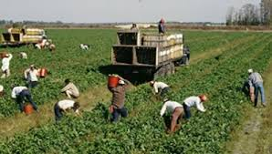 Munca - Muncitori pentru Agricultura (cules legume / fructe) in SPANIA! - - ( Spania )