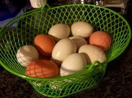 Image result for fresh eggs