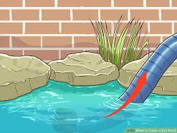 how to clean a koi pond. Exellent Koi Image Titled Clean A Koi Pond Step 8 In How To A
