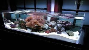 Cool Aquariums Sea Bathroom Decor Fish Tanks Aquariums Cool Saltwater Fish Tanks