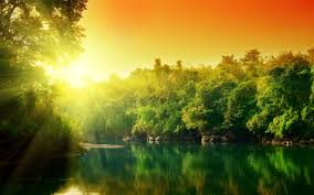 beautiful morning at amazon rainforest hd wallpaper