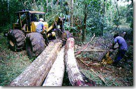 Image result for belize natural resources