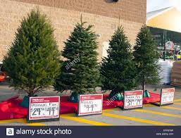 Types Of Christmas Trees  Broken Arrow NurseryTypes Of Fir Christmas Trees
