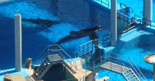 tilikum isolated. Simple Isolated AWI Statement In Response To Death Of SeaWorld Orca Tilikum In Isolated