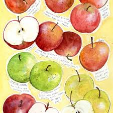 Apple Chart Dawn Tan